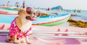 Tu mascota disfrutará a tope jugando en la playa (Istock)