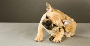 Lo mejor para evitar garrapatas y pulgas es la prevención (Istock)