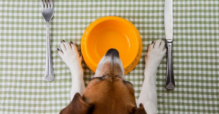 La comida de personas no tiene por qué ser perjudicial para tu perro (Istock)