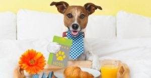 Los hoteles 'pet friendly' están adaptados para que a tu mascota no le falte de nada (Istock)