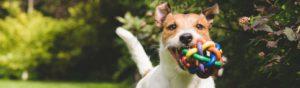 Recicla las cosas de casa para hacer juguetes a tu perro (Istock)