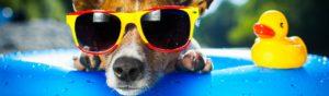 Con el calor, los perros también tienen ganas de playa y piscina (Istock)