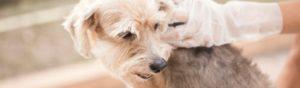 Vigila todas las semanas el pelo de tu perro (Istock)