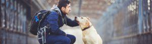 El abandono es uno de los mayores traumas que puede sufrir un animal (Istock)