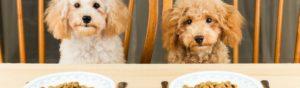 Los perros también pueden tomar alimentos para humanos (Istock)