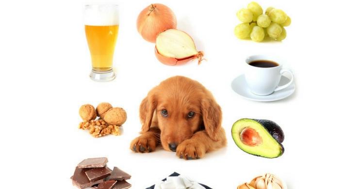 En la imagen puedes ver algunos de los alimentos más nocivos (Foto. Istock)