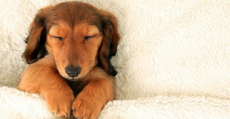 Dormir con tu perro será como estar con un peluche (Istock)
