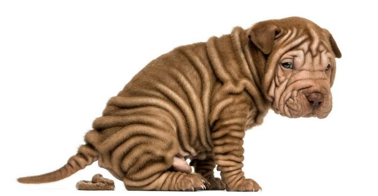 Tu perro puede tener incluso 'escondites' en los que guarde sus heces (Foto: iStock)
