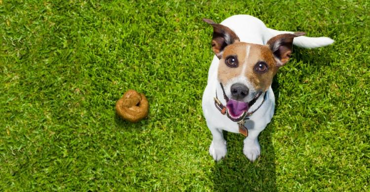 Si dudas, consulta a tu veterinario (Foto: Istock)