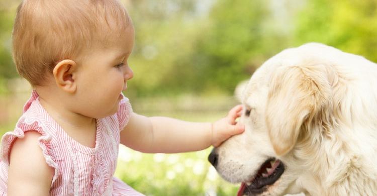 Normalmente se crea un vínculo muy fuerte entre bebé-mascota (Foto. Istock)