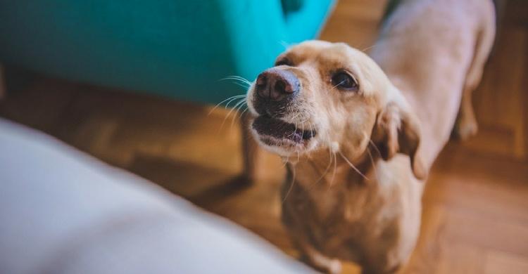 Tienes que ser firme a la hora de educar a tu perro (Foto. Istock)