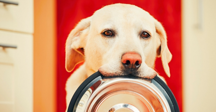 Tienes que tener en cuenta que los perros no tienen el mismo estómago que las personas (Foto. Istock)