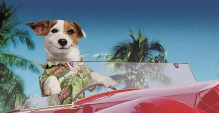 Pancho, uno de los perros más queridos de nuestro país (Fotograma anuncio de La Primitiva)
