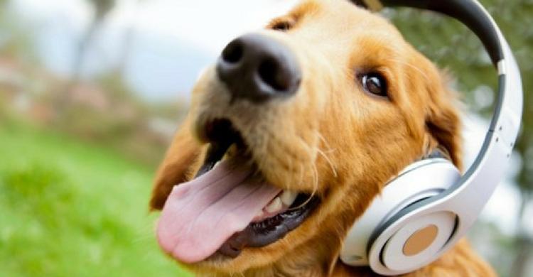 Conciertos para perros
