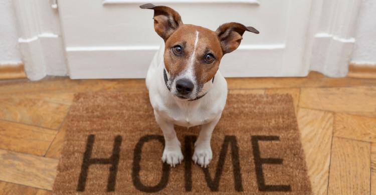 Manteniendo a nuestra mascota nos gastaremos una media de entre 70-100 euros al mes (Istock)