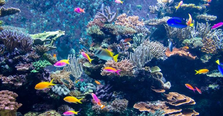 A la hora de comprar un acuario debes saber qué tipo de peces vas a tener (Istock)