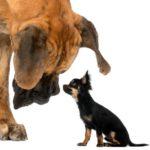 Se llevan mal con otros perros (Istock)