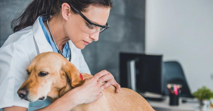 Acude al veterinario si ves que pueden desembocar en una enfermedad (Istock)