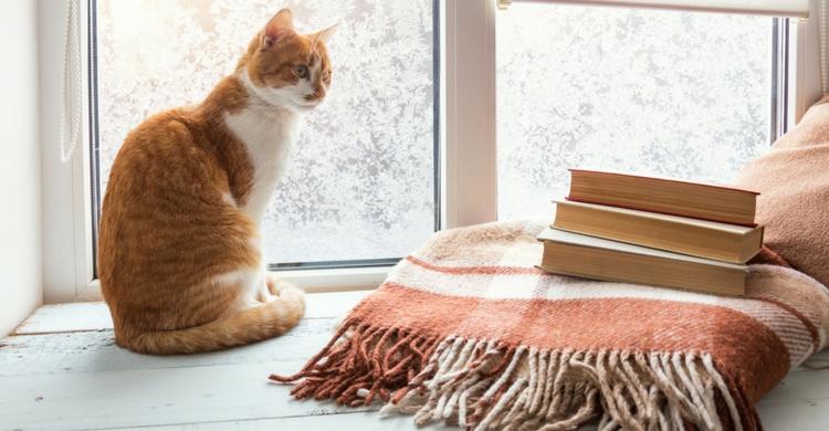 Es importante que sepas el coste medio antes de tener un gato (Istock)