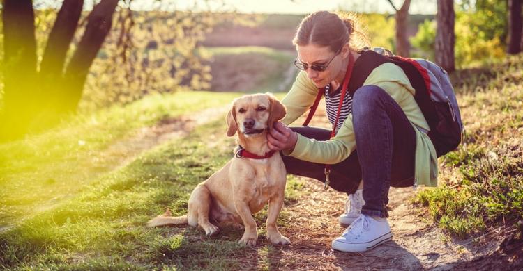 Vigila las zonas por las que se mueve tu perro (Istock)
