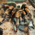 Las arañas (Istock)