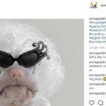 Marilyn Monroe (Instagram @anniepaddington)