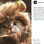 León (Instagram @elgatoysumelena)