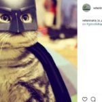 Batman (@veterinaria_la_asuncion)