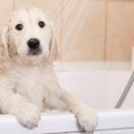Baña a tu perro (Istock)