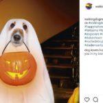 Fantasma (@walkingdogmx)