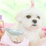 Lava sus juguetes con regularidad (Istock)