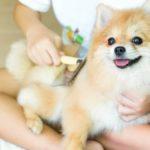 Cepilla el pelo de tu mascota con frecuencia (Istock)