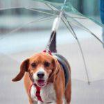 Paraguas para perros de Tiendanimal
