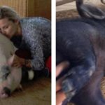 Eugenia Martínez de Irujo y sus cerdos: Bacon y Panceta (Instagram)