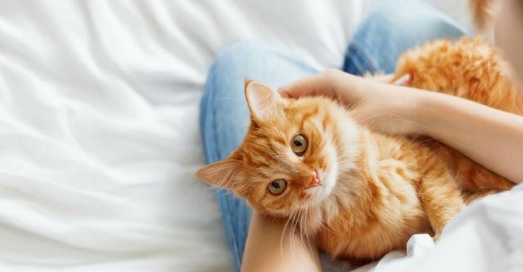 Es importante tener un seguro veterinario (Istock)