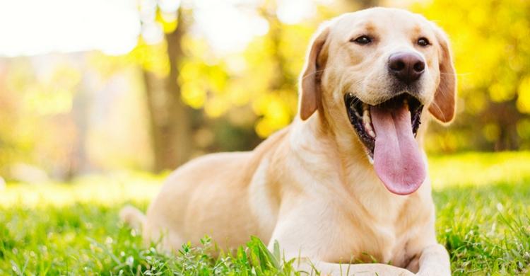 La halitosis en perros es muy frecuente (Istock)