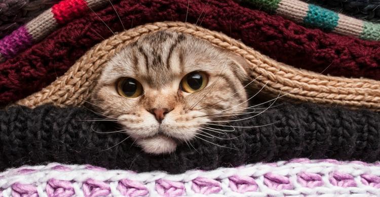Controla si tu mascota puede estar pasando frío (Istock)