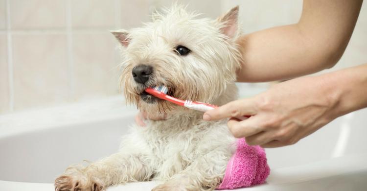 Lava sus dientes todos los días (Istock)