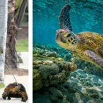 Leonardo Dicaprio tiene una tortuga sulcata desde el 2010 (Instagram/Istock)