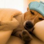 3. Si el frío persiste, coloca su cama al lado de una fuente de calor (Istock)