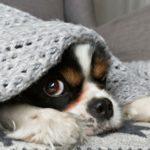 2. Mantas, mantas, y más mantas (Istock)