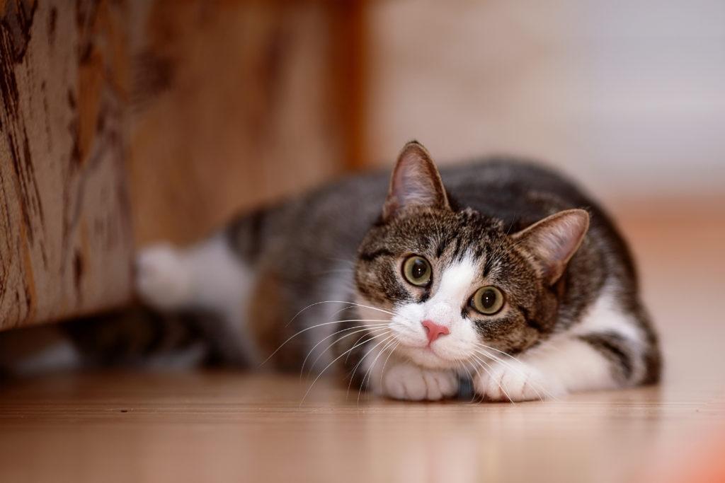 Los gatos son animales por naturaleza carnívoros (Foto: iStock)