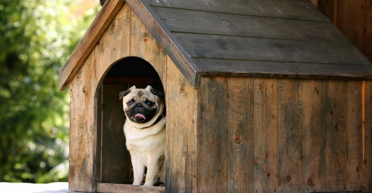 La planificación es fundamental cuando construyes la casa de tu perro (Istock)