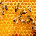 Las abejas (Istock)