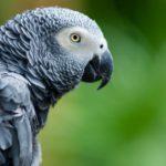 Sus alas pueden permanecer muy limpias (Istock)