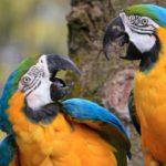 Una vez que encuentran a su media naranja… no la sueltan (Istock)