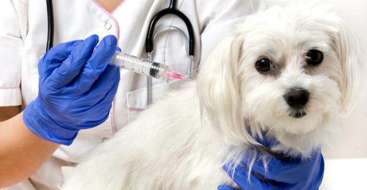 Respeta el calendario de vacunación (Istock)