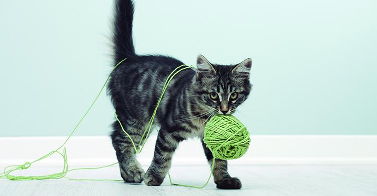 Cada gato tiene sus propios juegos (iStock)