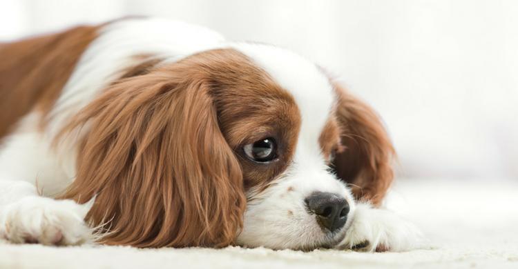 Los perros son animales muy sensibles que siempre quieren el bienestar para su amo (Istock)