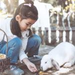 Los conejos son muy buenas mascotas (iStock)